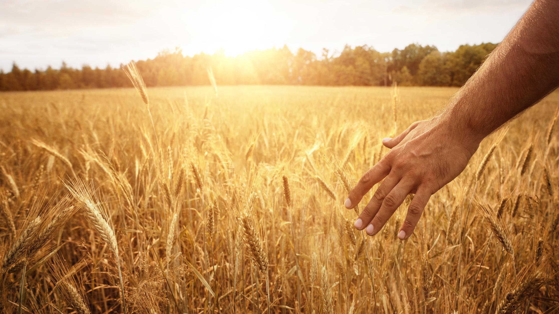 Landwirtschaft ist Leidenschaft